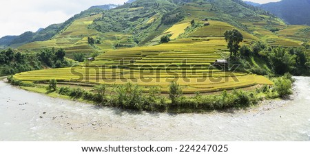 Asia rice field by harvesting season in Mu Cang Chai district, Yen Bai, Vietnam. Terraced paddy fields are used widely in rice, wheat and barley farming in east, south, and southeast Asia - stock photo