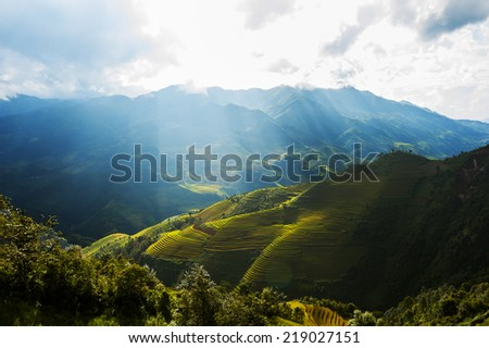 Asia rice terraced paddy field before harvesting season in Mu Cang Chai district, Yen Bai, Vietnam. The fields are used widely in rice, wheat and barley farming in east, south, and southeast Asia