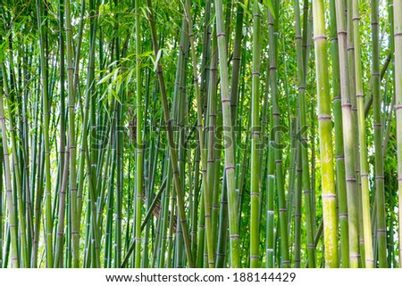 Asian bamboo forest in spring blossom - stock photo