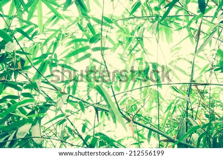 Asian Bamboo forest with morning sunlight background - stock photo