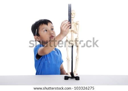 Asian boy measures human skeleton isolated on white background - stock photo