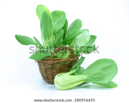 asian cabbage pak choy - stock photo