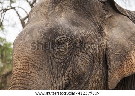 Asian elephant close up portrait - stock photo