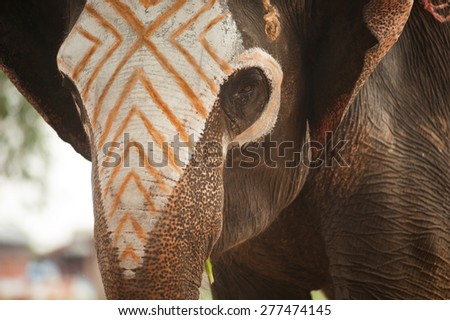 Asian Elephant face have been writing colors.