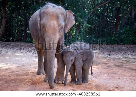 Asian elephant mother and child, Elephant village Thailand. - stock photo