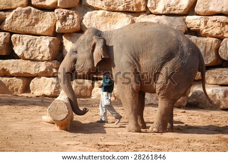 asian elephant pushing the log