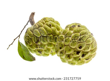 Asian famous Noni fruit isolated - stock photo