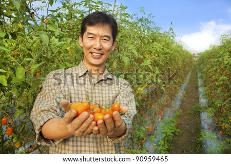 asian farmer holding tomato on his farm - stock photo