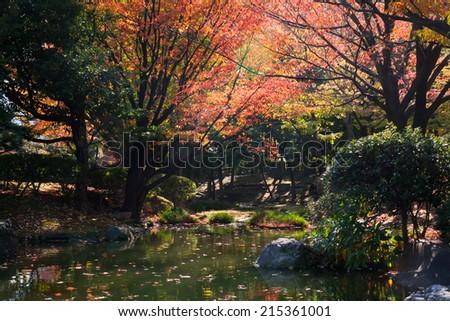 asian garden in autumn - stock photo