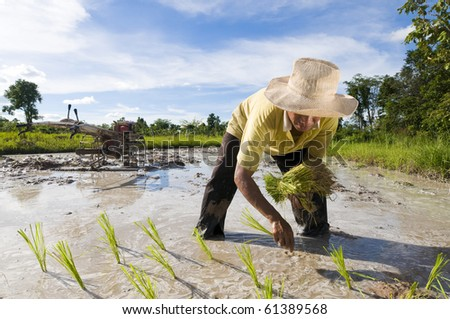 asian male rice farmer at work on a sunny day with a plow in the background