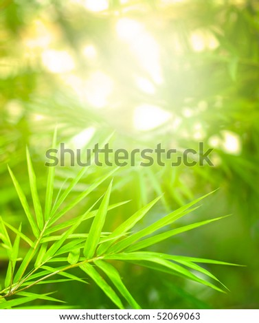 asian nature bamboo forest with rays of light - stock photo