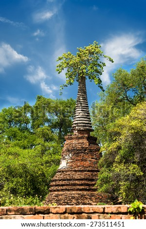 Asian religious architecture. Ancient ruins with growing trees under blue sky. Ayutthaya, Thailand travel landscape and destinations - stock photo