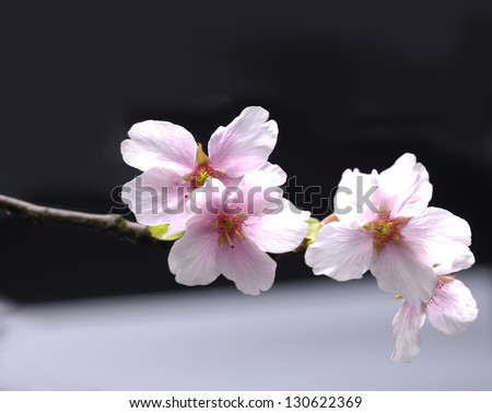 Asian style concept. - stock photo