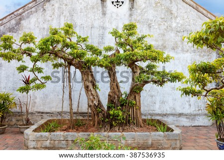 asian tropical garden, Ninh Binh, Vietnam - stock photo