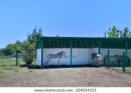 ASKANIA-NOVA, KHERSON REGION, UKRAINE - JULY 1, 2014: animals in the zoo of Ukrainian worldwide famous Askania-Nova reserve, member of the World Network of Biosphere Reserves of UNESCO. Zebras. - stock photo