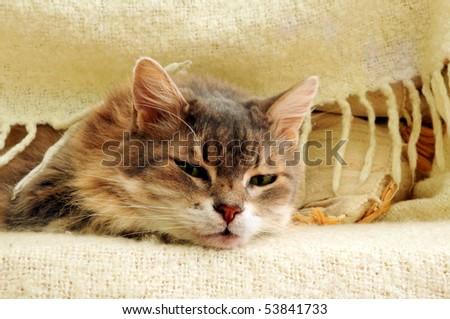 asleep cat under blanket - stock photo