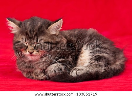 Asleep cute little kitten over red background
