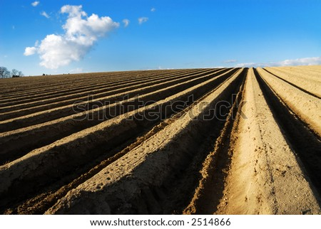 Asparagus field - stock photo