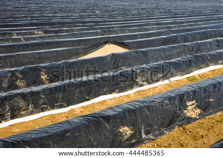 Asparagus field in Bavaria covered with platic foil - stock photo