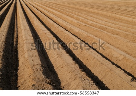 Asparagus field in springtime - stock photo