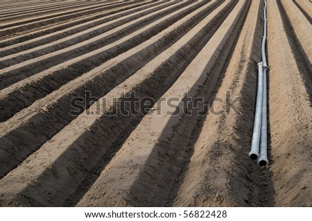 Asparagus field with irrigation pipes in springtime - stock photo