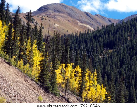 Aspen and pine at treeline in the Colorado Rocky Mountains