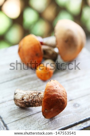 Aspen bolete mushrooms picked up and put on the table - stock photo