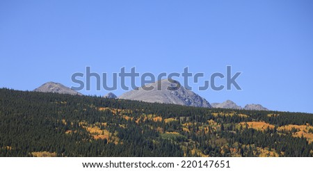 Aspen Grove in full Autumn Colors with Pine Trees and Mountain Background - stock photo