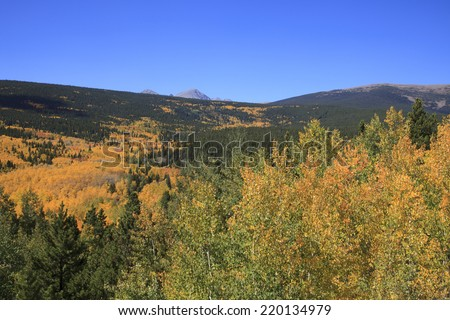 Aspen Grove with Blue Sky - stock photo