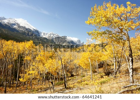 Aspen Trees and Mountains in Fall at Rocky Mountain National Park - stock photo