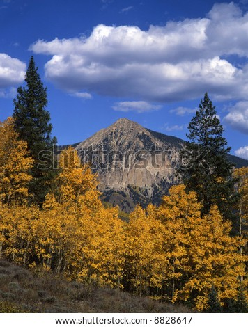 Aspen trees and Mt. Crested Butte, in the Gunnison National Forest, photographed during the autumn season. - stock photo