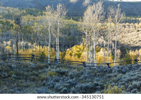 Aspens trees along a wooden fence lit by the last light of the day on the Cataract Loop Trail in the Arapaho National Forest in the Rocky Mountains of Colorado. - stock photo