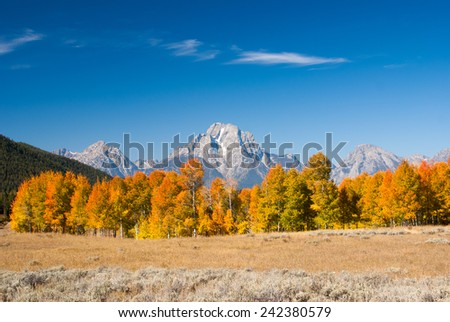 Aspens turn in Fall at Grand Tetons National Park