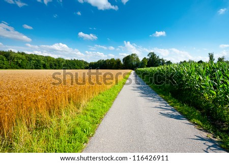 Asphalt Path between Corn and Wheat Fields in Bavaria, Germany - stock photo