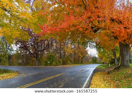 Asphalt road covered with Autumn trees in a rainy day