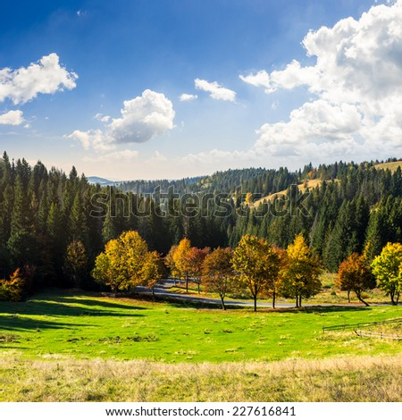 asphalt road going through green meadow with trees near autumn forest with foliage in mountains