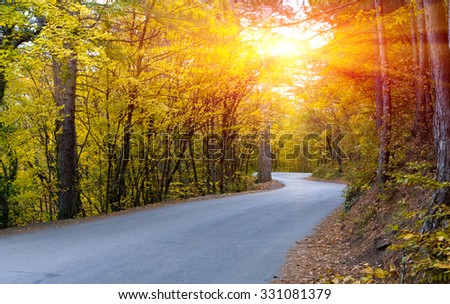 Asphalt road in autumn forest - stock photo