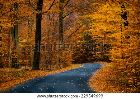Asphalt road in beautiful golden beech forest during autumn - stock photo