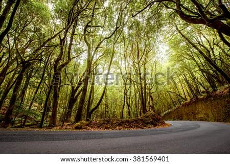 Asphalt road in evergreen forest in Garajonay national park on La Gomera island.  - stock photo