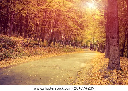 Asphalt road in forest. Ukraine, Europe. Beauty world. Retro style filter. Instagram toning effect. - stock photo