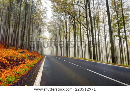 Asphalt road in the autumn oak forest - stock photo
