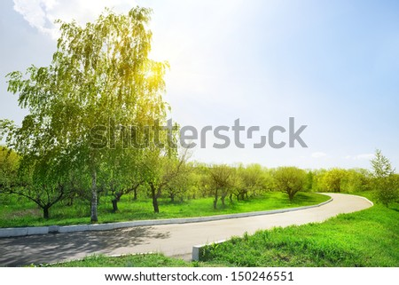 Asphalt road in the park on a sunny day - stock photo