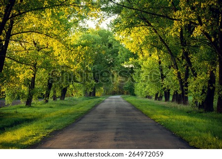 Asphalt road in the sunset green forest - stock photo