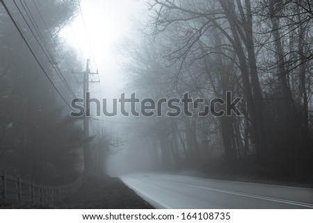 Asphalt road into forest in fog - stock photo