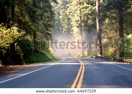 Asphalt road running through forest - stock photo
