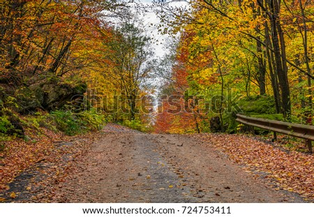 asphalt road uphill in autumn forest on overcast day. lovely nature scenery with lots of colorful foliage on hillside