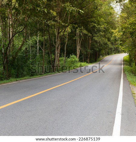 asphalt roadway through green forest