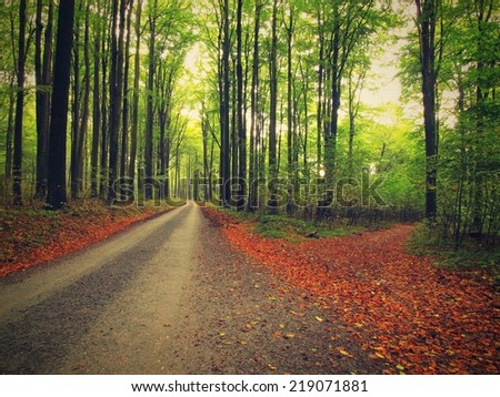 Asphalt way bellow beech trees. Autumn forest surrounded by fog. Rainy day.   - stock photo