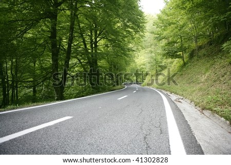 Asphalt winding curve road in a beech green forest - stock photo