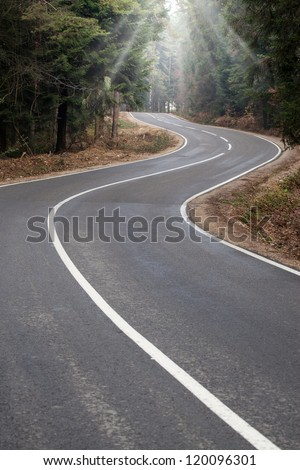 asphalt winding road passes through the forest, the sun's rays can penetrate through the trees